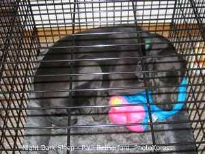 dog sleeping in metal kennel