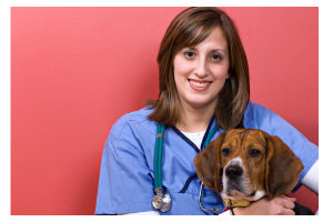 veterinarian_2_microsoft